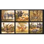 Djungel savann